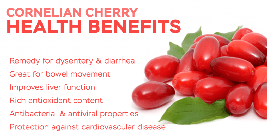 Cornelian Cherry Benefits